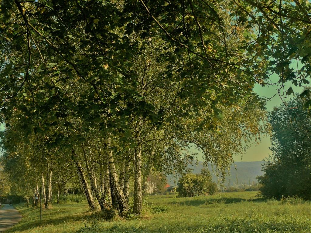 Grüne Wiesen, mächtige Bäume, ein wertvolles Biotop - der Ochsenkopf